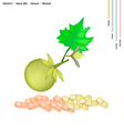 Bolo Maka Fruits with Vitamin C B3 and Calcium vector image vector image