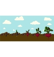 Set of realistic vegetables beets vector image