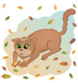 aut cat vector image