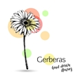 Gerbera flower for wedding or birthday card vector image