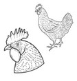 Chicken isolated on white background design vector image