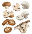edible mushrooms shiitake oyster cremini white vector image