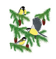 tits on fir branches vector image vector image