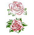 a red rose flower with green leaves vector image