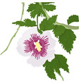 lilac hibiscus vector image