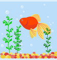 transparent aquarium sea aquatic background vector image