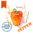 Pepper watercolor banner vector image