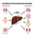 process of detoxification and elimination cartoon vector image