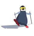 Baby Ski Penguin vector image