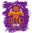 boxing tiger purple vector image