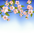 Spring Background of a Blossoming Tree Branch with vector image vector image