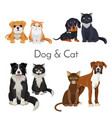 dog and cat promotional poster with grown animal vector image