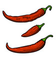 set of chili pepper isolated on white background vector image