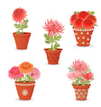 collection of chrysanthemum planted in ceramic vector image