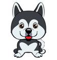 dog alaskan malamute breed sitting icon vector image