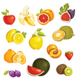 fruits icons vector image