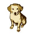 Fun and cute little dog golden retriever vector image