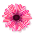 flowers realistic vector image vector image