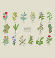 set of herbs collection hand drawn medical vector image