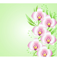 background with pink orchids vector image vector image