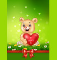 cute bear holding red heart balloons on green gras vector image