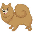 cartoon dog pomeranian husky vector image