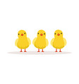 three cute chickens vector image