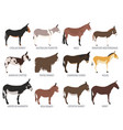 donkey breeds icon set animal farming flat design vector image