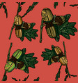 hand drawn seamless pattern with acorns vector image