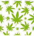 cannabis or marijuana leaves seamless pattern vector image