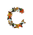 letter c cat font pet alphabet symbol home animal vector image