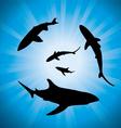 sharks underwater vector image vector image