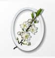 branch of white cherry flowers in paper frame vector image