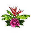 bouquet of tropical flowers with rose on white vector image