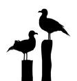 Sea gull silhouettes vector image
