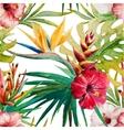 Sterlitzia tropical pattern vector image
