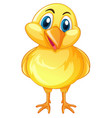 little chick with happy face vector image