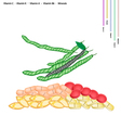 Green Beans with Vitamin C K A and B vector image