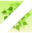 Fresh background of green birch leaves vector image vector image