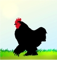 Cockerel silhouette on Morning sky vector image