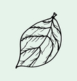 drawing of leaves vector image