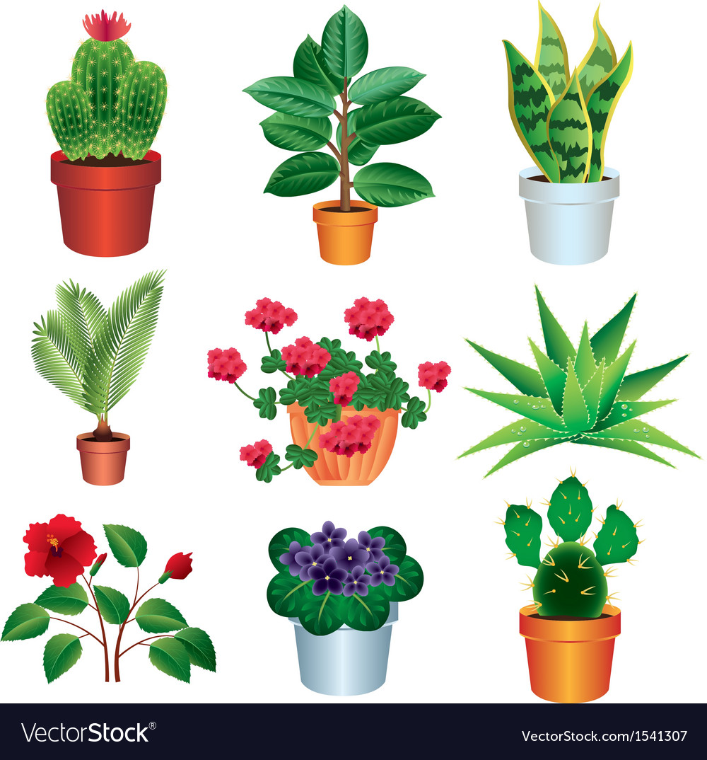 Home plants vector