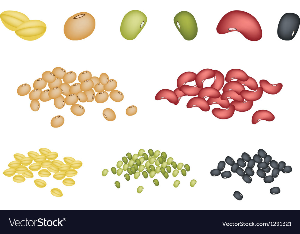 Set of different beans on white background vector