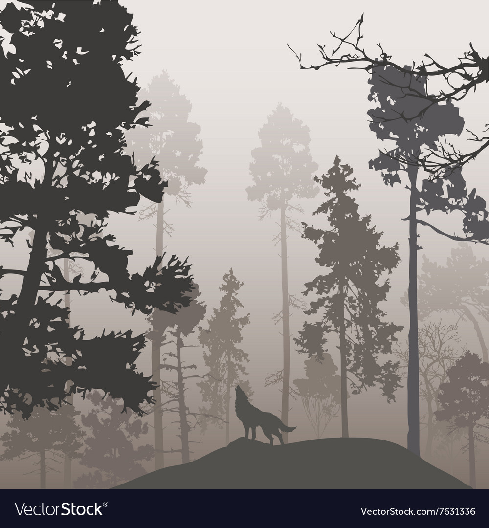 Pine forest and the wolf vector