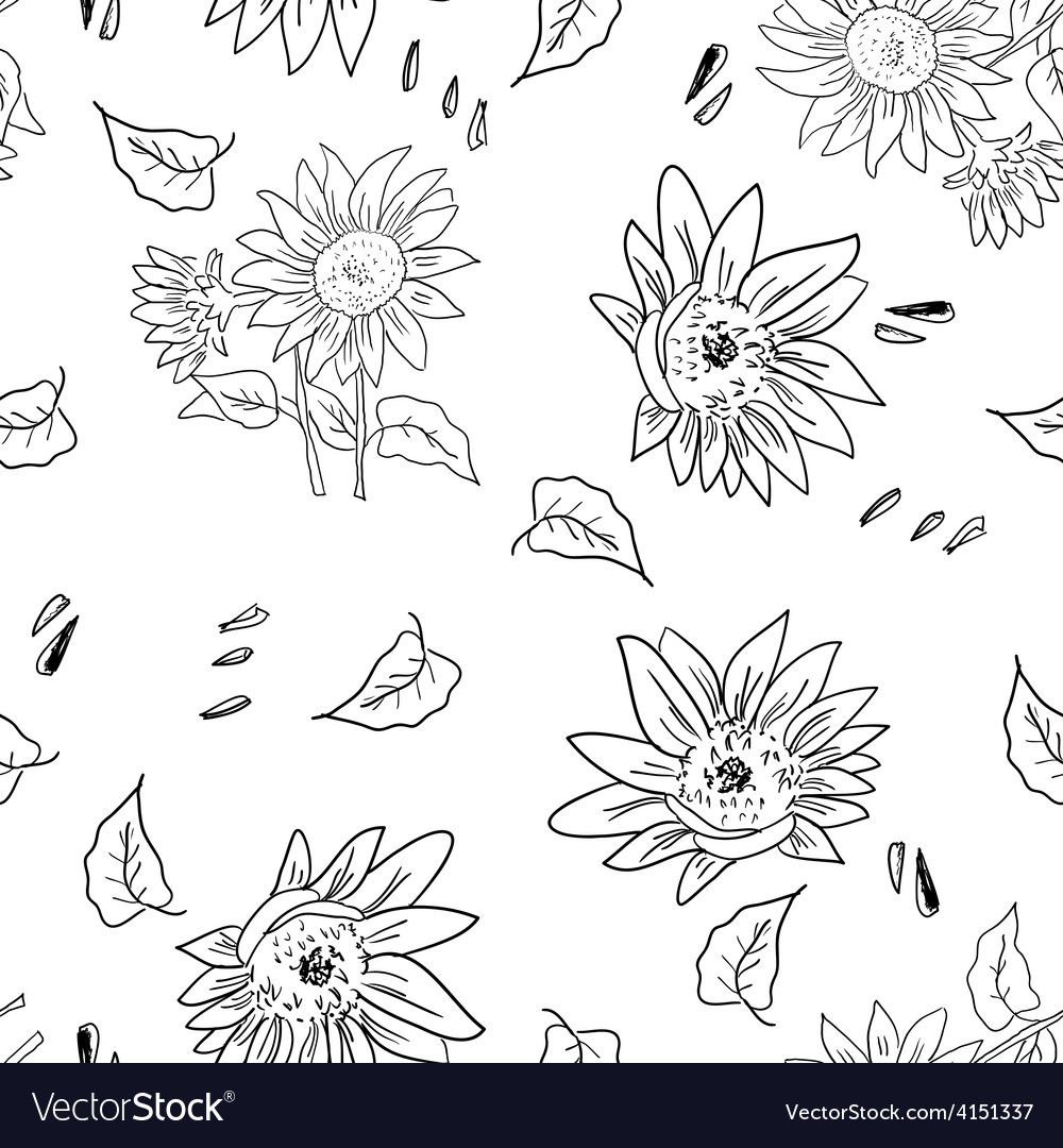Composition sunflower vector