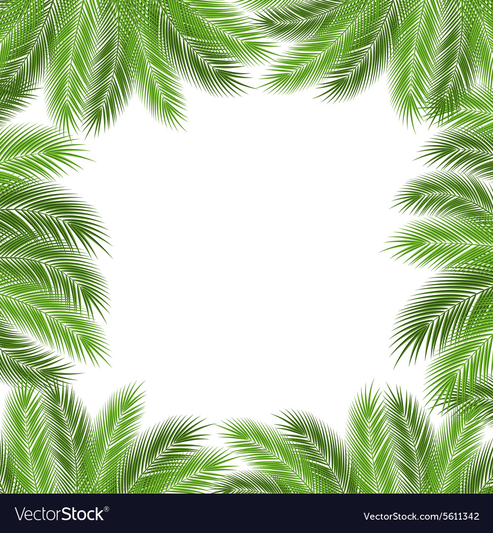 Leaves of palm vector