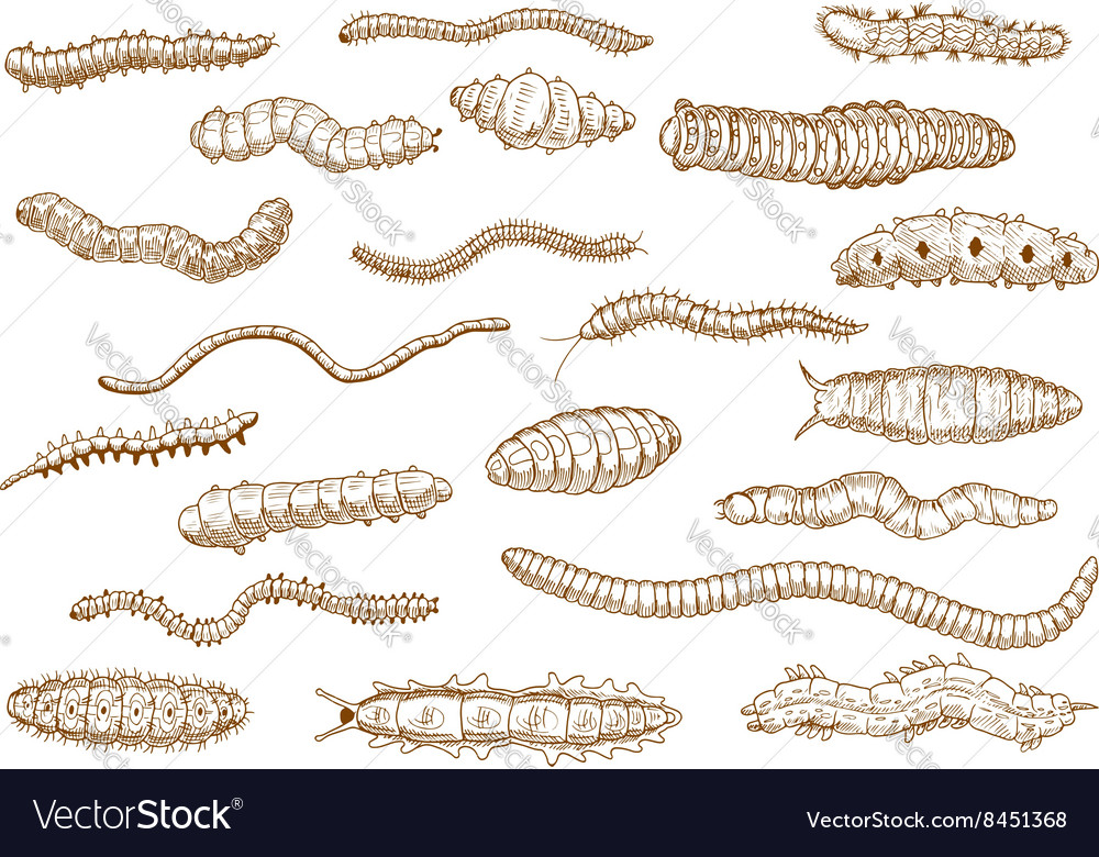 Caterpillars larvae worms slugs centipedes vector