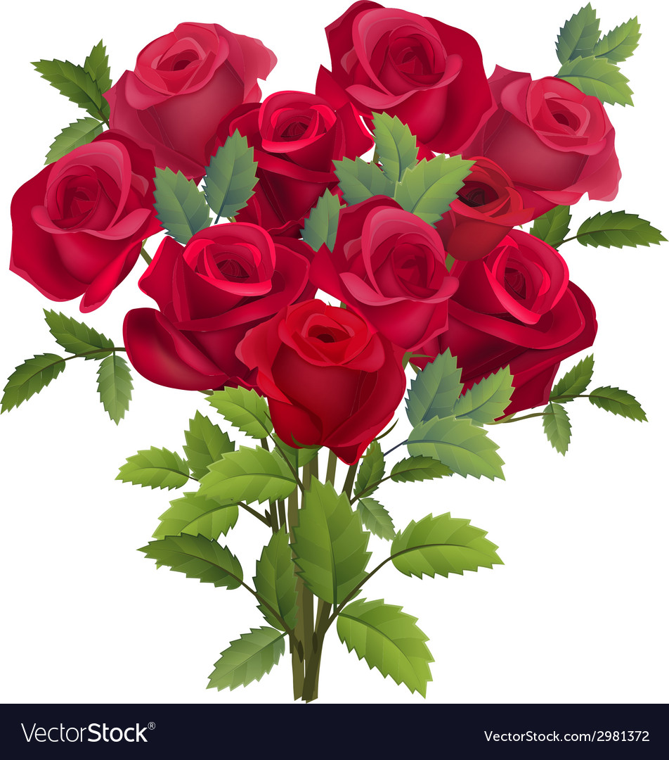 Realistic bunch of red roses vector