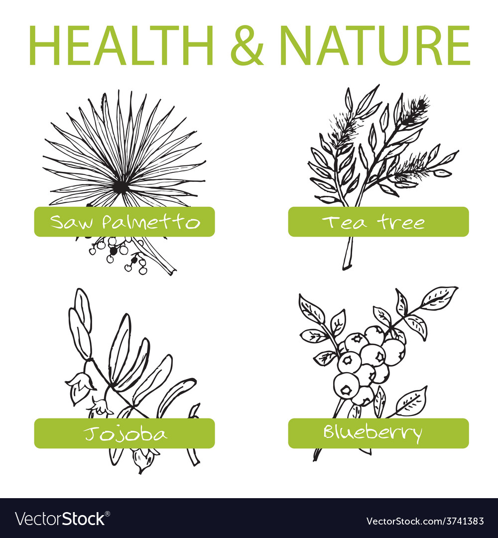 Handdrawn set  health and nature collection of vector