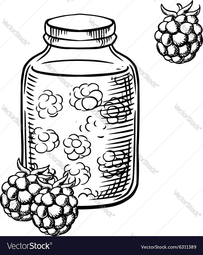 Sketch of raspberry jam in jar and berries vector